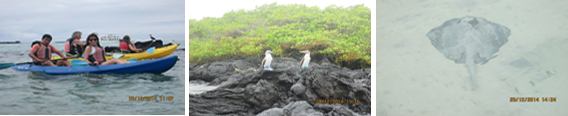 kayaking tours galapagos island
